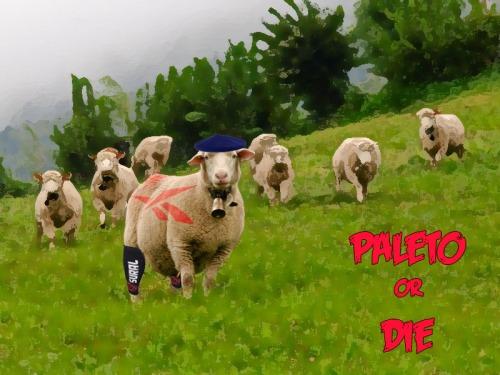 PALETO RUNNING