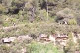Tuga Trail (504)