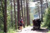 Trail Moixeró 39k Últims metres (270)