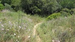 Cursa Ecologica a (26)