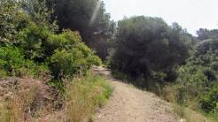 Cursa Ecologica a (35)