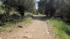 Cursa Ecologica a (43)