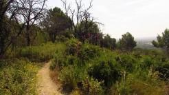 Cursa Ecologica a (47)