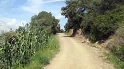 Cursa Ecologica a (74)