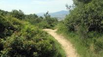 Cursa Ecologica a (8)