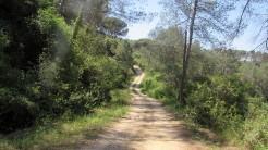 Cursa Ecologica b (25)