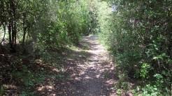 Cursa Ecologica b (48)