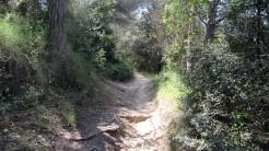 Cursa Ecologica b (5)