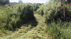 Cursa Ecologica c (2)