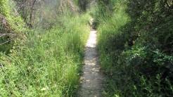 Cursa Ecologica c (9)