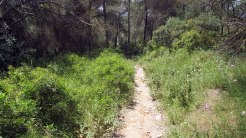 Cursa Ecologica d (10)