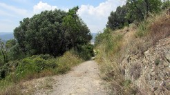 Cursa Ecologica d (21)