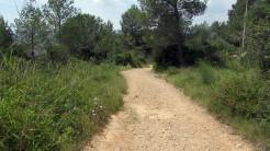 Cursa Ecologica d (26)