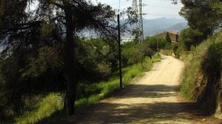 Cursa Ecologica d (6)