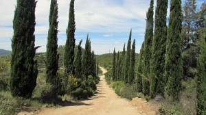 Vigia Trail (102)