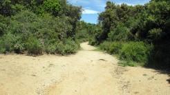 Vigia Trail (106)