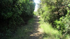 Vigia Trail (108)