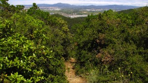 Vigia Trail (115)