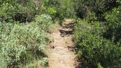 Vigia Trail (116)