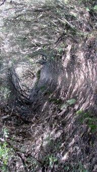 Vigia Trail (118)