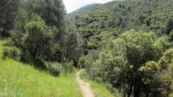 Vigia Trail (121)