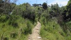 Vigia Trail (128)