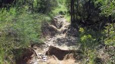 Vigia Trail (129)