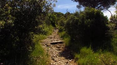 Vigia Trail (135)
