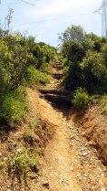 Vigia Trail (136)