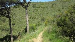 Vigia Trail (144)