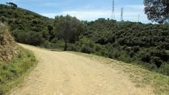 Vigia Trail (150)