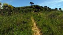 Vigia Trail (158)