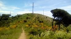 Vigia Trail (161)