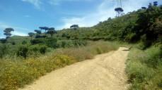 Vigia Trail (165)