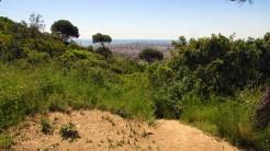 Vigia Trail (178)