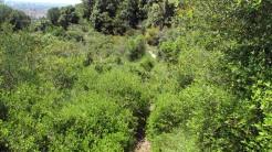 Vigia Trail (182)