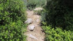 Vigia Trail (183)