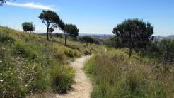Vigia Trail (194)
