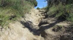 Vigia Trail (35)