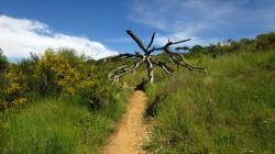 Vigia Trail (45)