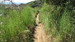 Vigia Trail (51)