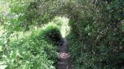 Vigia Trail (52)