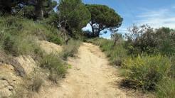 Vigia Trail (56)