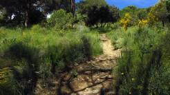 Vigia Trail (60)
