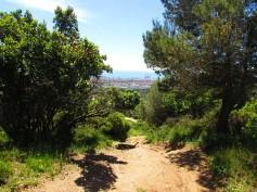 Vigia Trail (79)