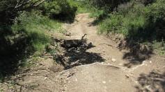 Vigia Trail (81)