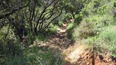 Vigia Trail (83)