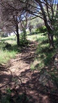 Vigia Trail (93)