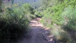 Gurrinada (56)