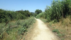 Trail Floresta ok (1)